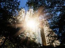 Manhattan arkitektur Sikt från St Pauls Churchyard royaltyfria foton