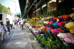 Manhattan flowers Royalty Free Stock Photography