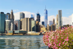 Manhattan and flowers. View of Lower Manhattan from Brooklyn thru flowers Royalty Free Stock Photography