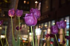 Manhattan Midnight Flowers. Flowers on a sidewalk captivate Stock Images