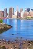 Manhattan New York skyline East River with ducks Stock Photo