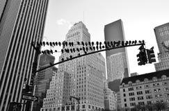 Manhattan-Skyline, New York City Lizenzfreie Stockbilder