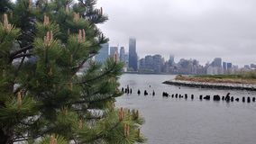 Manhattan view thru the pine tree from Long Island City. Manhattan view pine fro thr thru tree long island city royalty free stock image