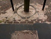 Manhole cover and tree. Royalty Free Stock Photos