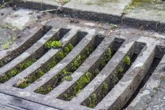 Manhole drain cover with moss. Manhole drain in the city covered with moss Royalty Free Stock Photos