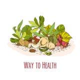 Manière à la santé - affiche nuts Image stock