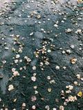 Manière d'automne Photographie stock