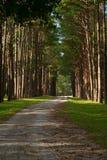Manière dans la forêt Image libre de droits