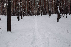 Manière dans la forêt couverte de neige Image stock