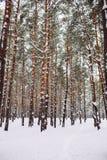 Manière dans la forêt couverte de neige Photos stock