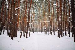 Manière dans la forêt couverte de neige Photos libres de droits