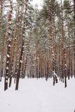 Manière dans la forêt couverte de neige Photographie stock libre de droits