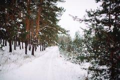 Manière dans la forêt couverte de neige Images stock