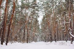Manière dans la forêt couverte de neige Images libres de droits