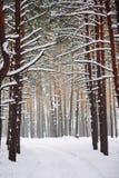 Manière dans la forêt couverte de neige Photographie stock