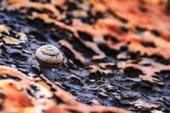 Manière de l'escargot photo stock