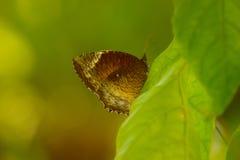 Manière de la vie de papillon Images libres de droits