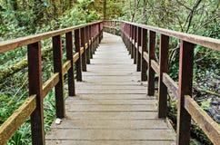 Manière de marche en bois dans la forêt d'arbre de colline Photo stock