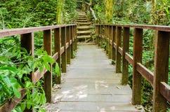 Manière de marche en bois dans la forêt d'arbre de colline Photos libres de droits