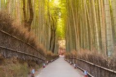 Manière de marche menant à la forêt en bambou Images libres de droits