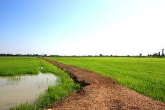 Manière de promenade sur le gisement de riz Images stock