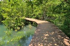 Pont en bois dans la forêt de palétuvier Images libres de droits