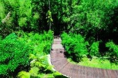 Manière en bois de courbe de promenade dans les forêts images stock