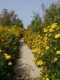 Manière en pierre avec les fleurs jaunes du côté Photos libres de droits