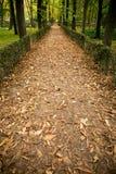Manière entre les arbres d'automne Image libre de droits