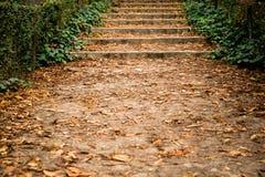 Manière entre les arbres d'automne Photographie stock libre de droits