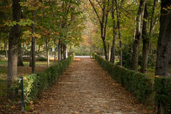 Manière entre les arbres d'automne Images libres de droits