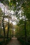 Manière entre les arbres d'automne Image stock