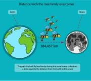 Manière qui est surmontée par une famille des abeilles pendant le rassemblement principal de miel Image stock