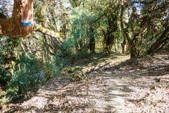 Manière sur la montagne pour le trekking Images libres de droits