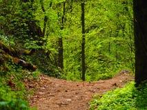 Manière vers le bas dans la réservation de paysage de ³ de kiÅ de ¡ de KaroliniÅ en bois Photo libre de droits