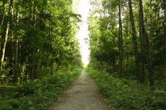 Manière verte de forêt Images libres de droits