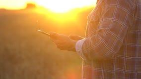 Mani alte vicine degli agricoltori con la compressa nel giacimento di grano al tramonto r Uomo archivi video