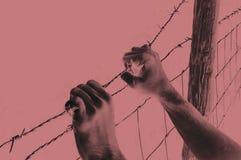 Mani che afferrano disperatamente filo spinato su rosso Immagini Stock Libere da Diritti