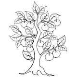 Mani che disegnano di melo Illustrazione di vettore L'illustrazione per l'invito, gli elementi della marca prenota, logo illustrazione di stock
