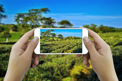 Mani che prendono foto dallo smartphone immagini stock