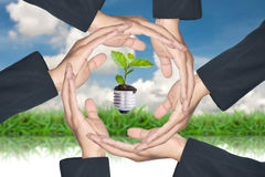 Mani che proteggono albero verde Fotografie Stock