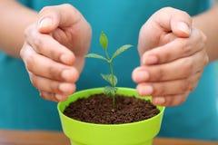 Mani che proteggono una plantula Fotografia Stock Libera da Diritti