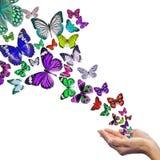 Mani che rilasciano le farfalle Immagini Stock