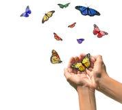 Mani che scaricano le farfalle nello spazio bianco in bianco Fotografie Stock