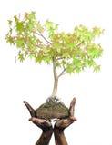Mani che tengono albero su bianco Fotografia Stock