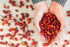 Mani che tengono berrie rosso immagine stock libera da diritti