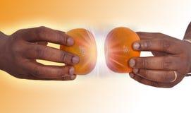 Mani che tengono due mandarini Immagini Stock