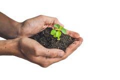 Mani che tengono giovane pianta verde, isolata su bianco Il concetto di ecologia, protezione dell'ambiente fotografia stock