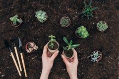 Mani che tengono gli strumenti di cui sopra del suolo e di giardinaggio delle piante in vaso verdi Immagine Stock Libera da Diritti