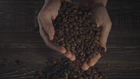 Mani che tengono i chicchi di caffè stock footage